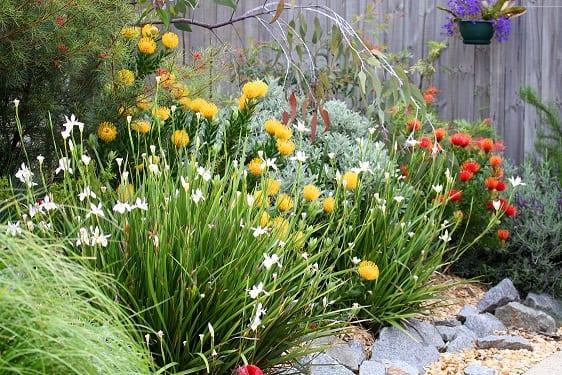 garden at ACH Group Morphett Vale retirement living units