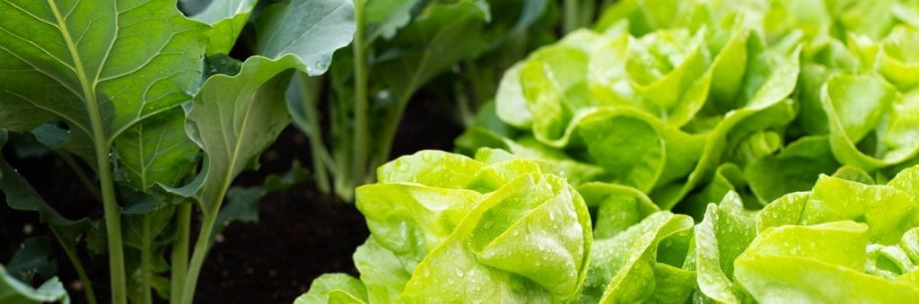 10 vegies for small space