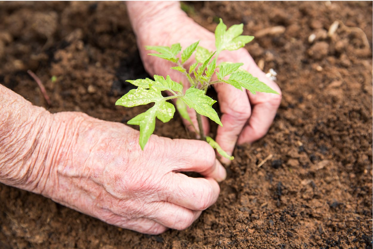 Gardening to stay active