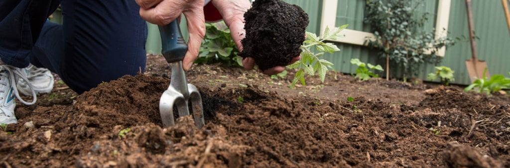 composting and how you can get started