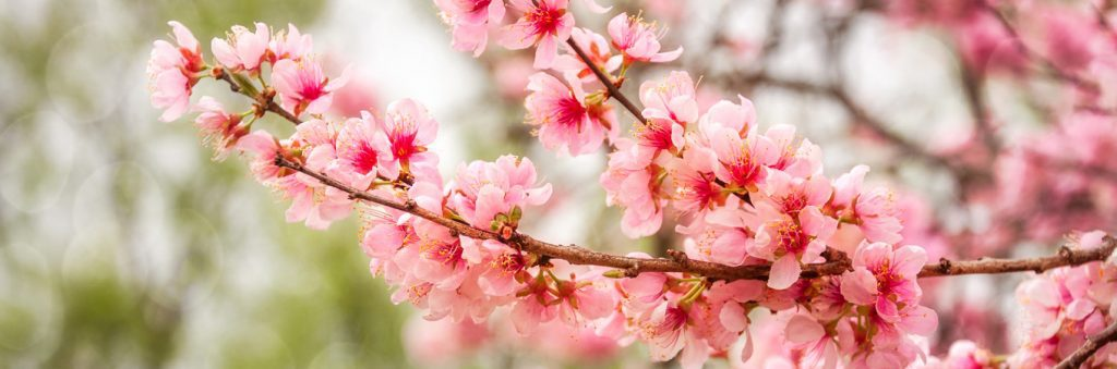 Spring activities for retirement living home